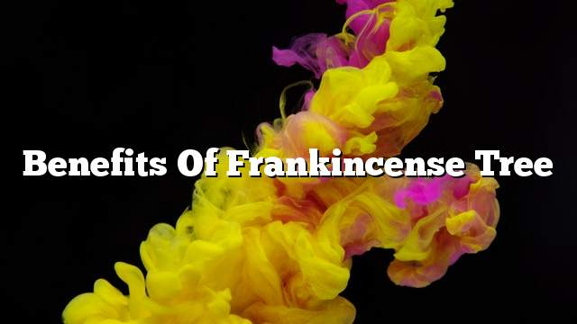 Benefits of frankincense tree