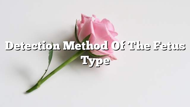 Detection method of the fetus type
