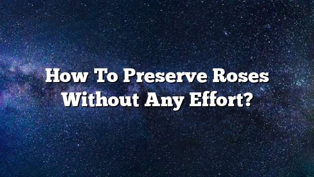 How to preserve roses without any effort?