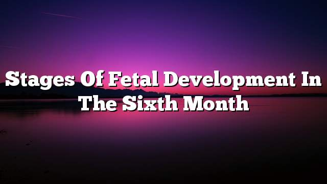 Stages of fetal development in the sixth month